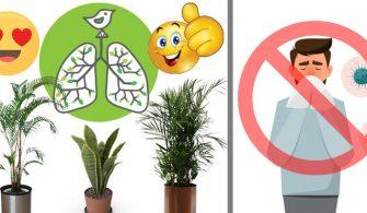 havayı temizleyen bitkiler
