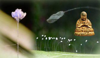 udumbara çiçeği