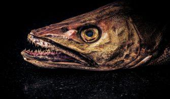 balık ısırması durumunda ne yapılır