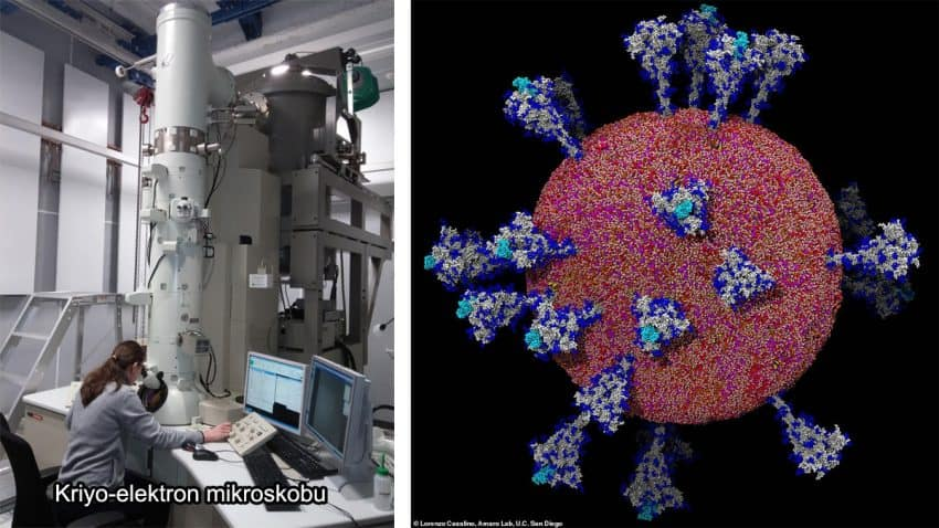 koronavirüs mikroskop