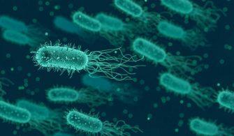 faydalı ve zararlı bakteriler