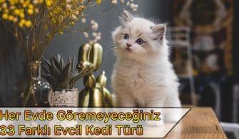 33 evcil kedi türü