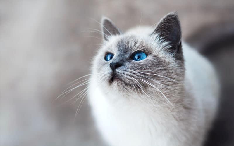 evcil kedi turu 5